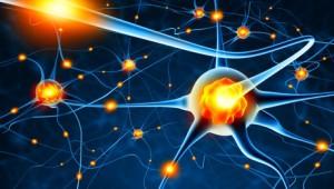 En formation, mieux vaux viser juste dès le départ. La preuve par la chimie du cerveau ?